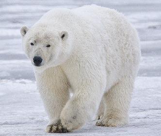 BLOG 8 - ijsberen op de gang